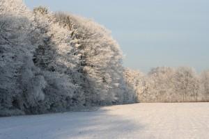 frozen-treetops-1063895_960_720[1]